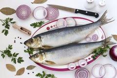 被盐溶的鲱鱼用红洋葱、月桂叶和荷兰芹 库存图片
