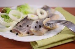 被盐溶的鲱鱼 库存照片