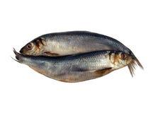被盐溶的鲱鱼 免版税库存图片