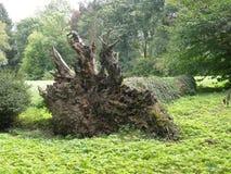 被盖的下落的树 免版税库存图片