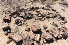 被石化的和矿化的树干在霍里克萨斯的,纳米比亚,非洲著名化石森林国家公园 280百万年 免版税库存图片