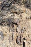被石化的和矿化的树干在霍里克萨斯的,纳米比亚,非洲著名化石森林国家公园 280百万年 库存照片