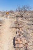 被石化的和矿化的树干 游人在霍里克萨斯的,纳米比亚,非洲著名化石森林国家公园 280 milli 免版税库存照片