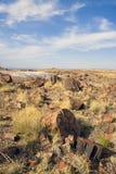 被石化的森林国家公园 免版税库存照片