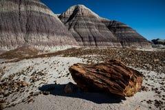 被石化的森林 在路线66的著名点 免版税库存照片