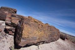 被石化的森林 免版税图库摄影