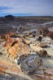 被石化的森林 库存图片