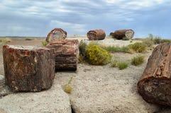 被石化的森林 免版税库存照片