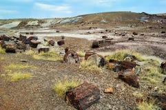 被石化的森林 库存照片