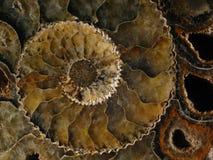 被石化的舡鱼 免版税库存照片