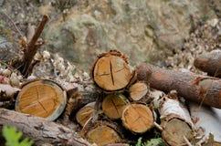 被砍伐山林的剪切结构树木头 库存图片