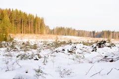 被砍伐山林的区域在有分支的一个森林里在前景 免版税图库摄影