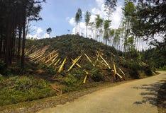 被砍伐山林的小山在中国 免版税库存照片