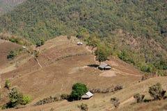 被砍伐山林的看法 库存图片