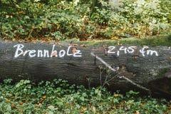 被砍成的树在准备好的森林里销售作为木柴 免版税库存图片