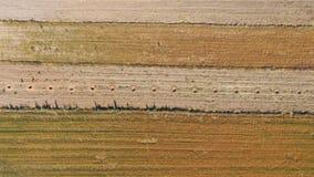 被研的传送带,杏仁在谷物之间的庄稼孔由于寄生虫 免版税库存照片