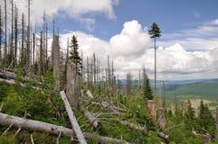 被破坏的森林 免版税库存照片