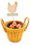 被种植的郁金香电灯泡 免版税库存图片