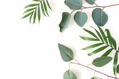 被称呼的储蓄照片 在白色背景隔绝的密林结构的绿色棕榈和玉树叶子 热带的夏天 免版税库存图片