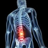 被突出的男性脊椎 免版税库存照片