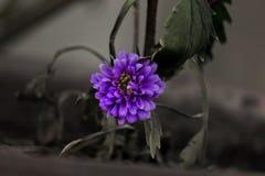 被突出的紫色花 免版税库存照片