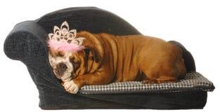 被纵容的宠物 免版税库存照片