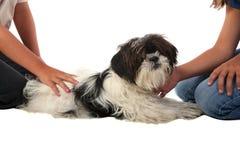 被纵容的狗 免版税库存照片