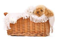 被纵容的狗 免版税库存图片