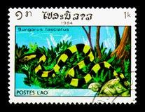 被结合的Krait (泰卢固环蛇fascitus), serie,大约1984年 免版税库存照片