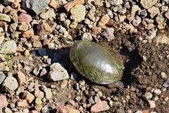 被绘的乌龟开掘的嵌套 免版税库存照片