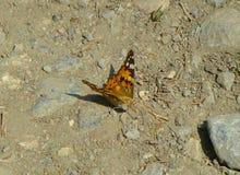 被绘的夫人蝴蝶坐地面 免版税库存图片