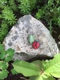 被绘的岩石 免版税图库摄影