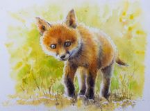 被绘的年轻狐狸水彩 免版税库存图片