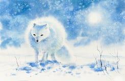 被绘的极性狐狸水彩 库存照片