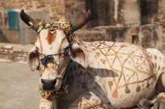 被绘的母牛 免版税图库摄影