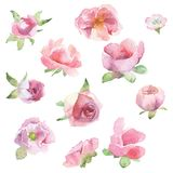 被绘的水彩设置了花 库存图片