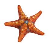 被绘的海星 免版税图库摄影