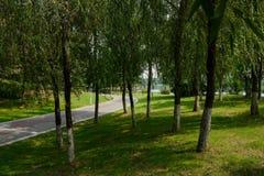 被绘的道路在湖边草坪和树在晴朗的夏日 免版税库存图片