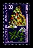 被绘的Vanessa夫人cardui和春黄菊属macrantha花、植物群和动物区系serie,大约1998年 图库摄影
