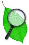 被编码的绿色叶子 库存图片