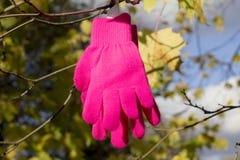 被编织的桃红色手套、黄色槭树和Â蓝天 库存照片