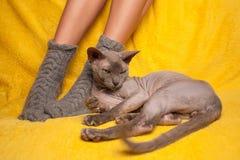 被编织的袜子的妇女在有狮身人面象猫的沙发 免版税图库摄影