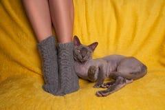 被编织的袜子的妇女在有狮身人面象猫的沙发 免版税库存图片