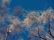 被缠结的树和蓝天 图库摄影