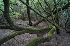 被缠结的森林 免版税库存照片