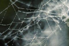 被缠结的网,水滴  免版税图库摄影