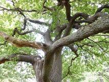 被缠结的结构树 免版税库存照片