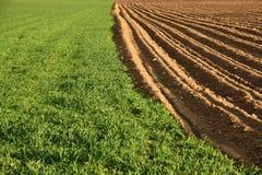 被耕的农田 免版税库存图片