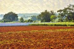 被耕的土地在印度 免版税库存图片