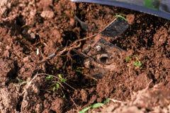 被耕的庭院的马达耕地机 库存照片